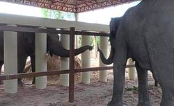 Kaavan the elephant makes new friend