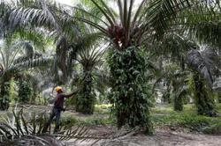Growing discontent with taxes on palm oil