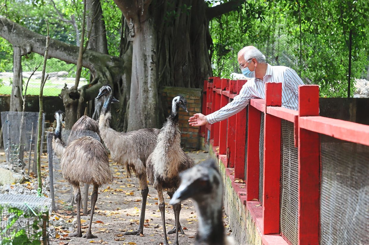 Dr Ooi checking on the ostriches at the Penang Bird Park.