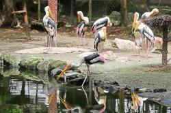 Pandemic clips wings of bird park