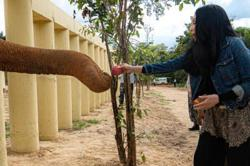 Singer Cher says Kaavan will live life as an elephant, not a prisoner