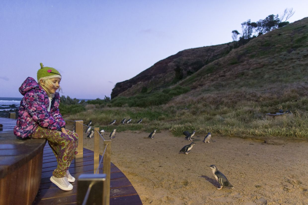 Join the Penguin Parade at the Philip Island Nature Park in Victoria. — Phillip Island Nature Park