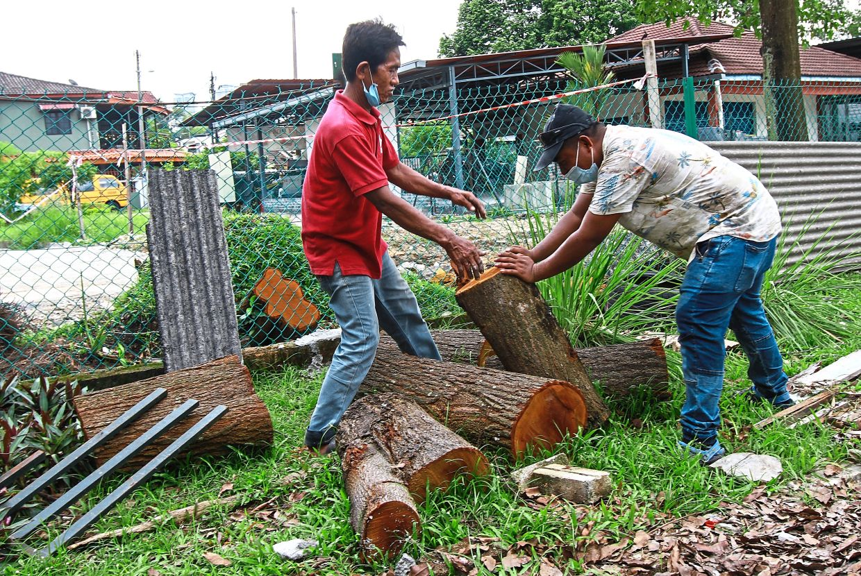 Contractors chopping down and removing one of the two trees that fell and damaged the porch and storeroom roofs of the kindergarten.