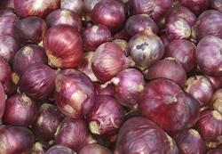 Hike in price of Indian onions due to floods there, says Rosol