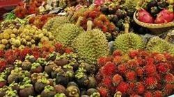 Gold rush in Thailand's 'fruit basket' as farmers switch to durian