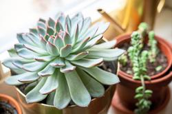 Only 2 ways you're likely to accidentally kill your succulents
