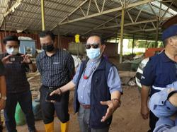 Two Sabah pig farms told to clean up act or risk being fined