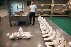 Thai researchers unearth rare whale skeleton