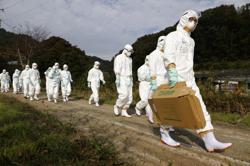 Bird flu outbreak in Japan spreads to fifth prefecture