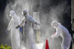 Japan to order nationwide disinfection against bird flu outbreak