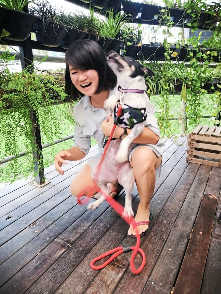 Cheong with Miu Miu, a dog she rescued from the bushes near her office. The dog is now staying with a lovely family.