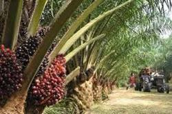 EPU withdraws nod to allow TH Plantations to sell two firms