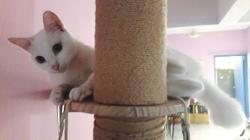 Katz Tales: Behind the sweet looks is a feline pirate princess