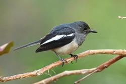 Survey on Southern Islands finds endangered species