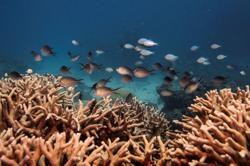Coral IVF trial offers hope of renewal for Australia's Great Barrier Reef