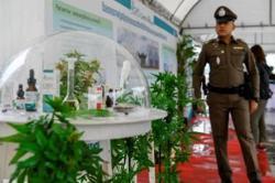 Eight Thai provinces to offer medical marijuana tour