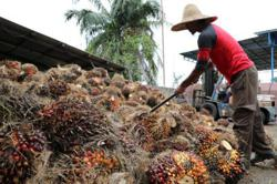 Palm oil punches through RM3,500 to highest in eight years