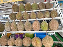 180 firms using Musang King name