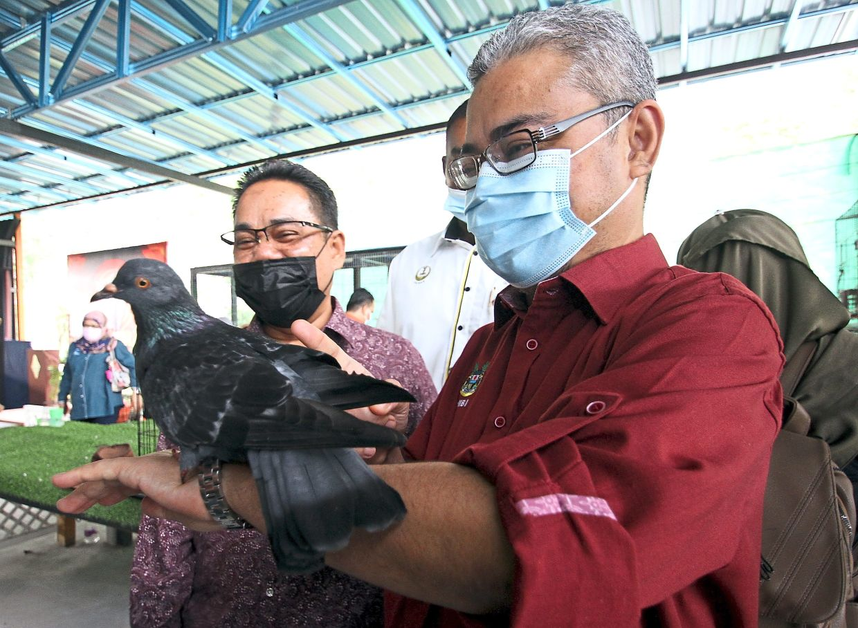 Rumaizi (right) with a pigeon perched on his arm after the soft launch of the petting zoo. —Photos: RONNIE CHIN/The Star