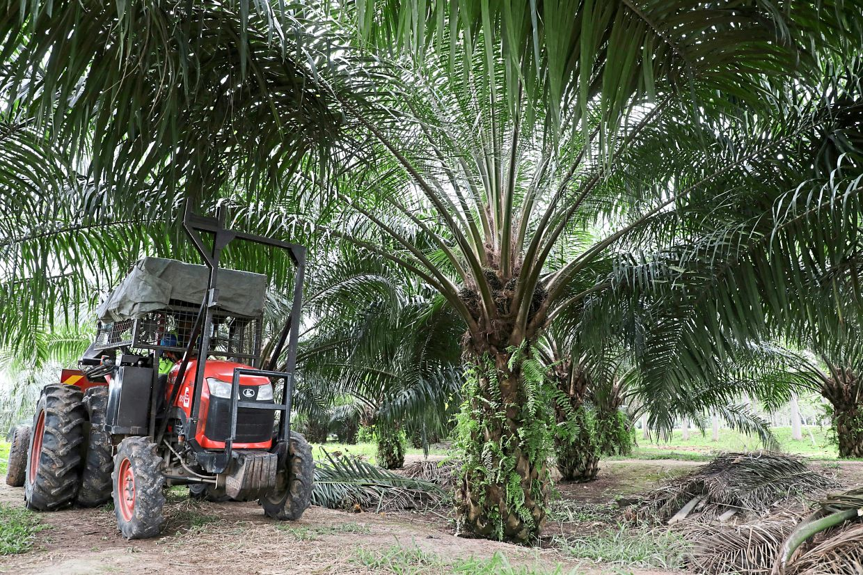 Positive signs: Crude palm oil continues to extend its rally trading above RM3,800 per tonne. — Reuters