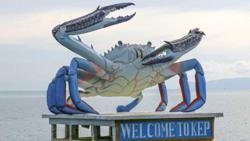 Crab banks buoy yields of Cambodia's marine fisheries