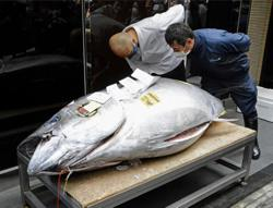 Giant bluefin tuna fetches 20 million yen in first auction in Japan