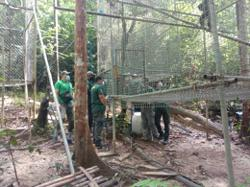 Perhilitan: Six gibbons confiscated doing well and safe at wildlife centre in Sungkai