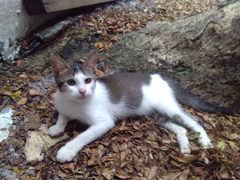 Photo: SPCA Selangor/Lily Leng