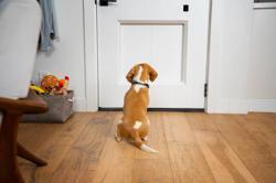 US garage door company sells smart pet door for a whopping RM12,000