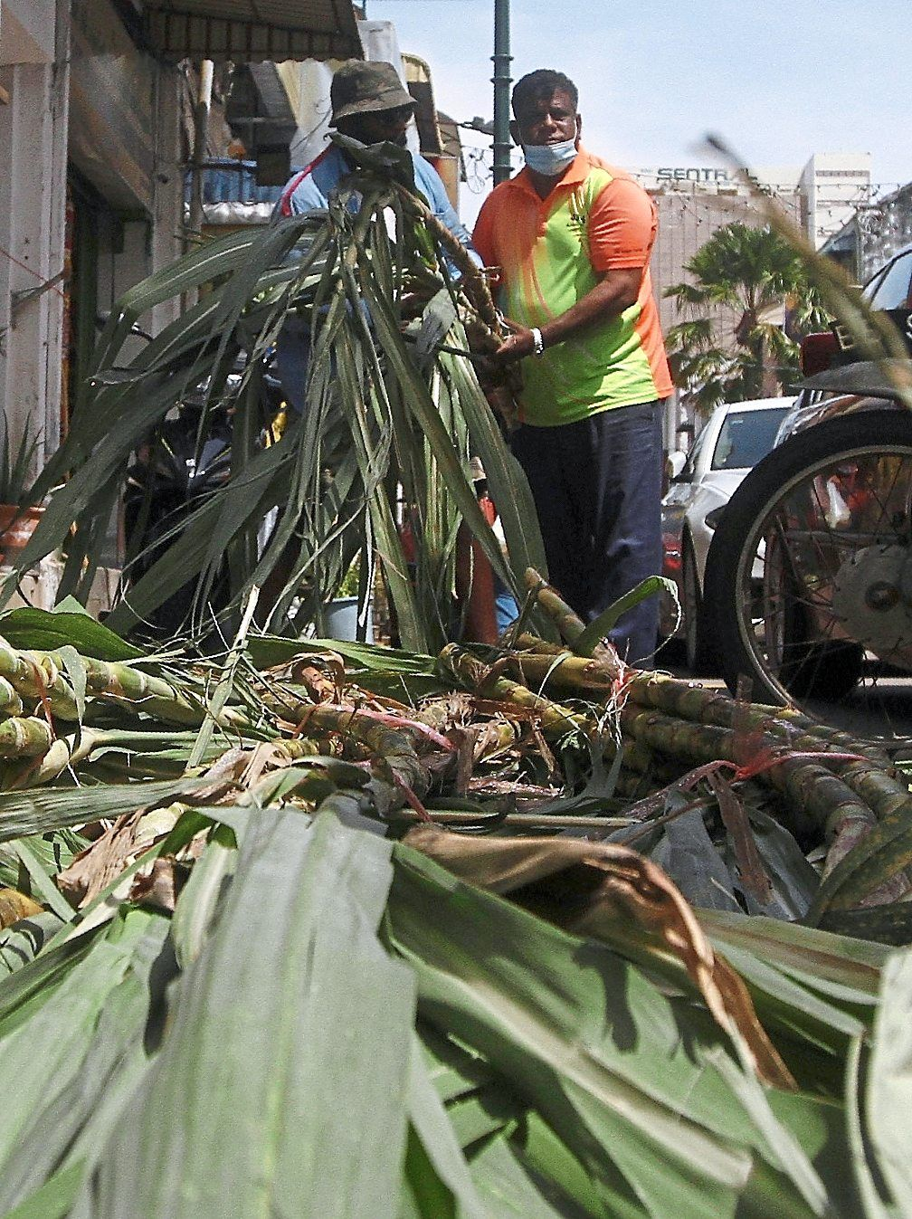 People seen buying sugarcane stalks to  celebrate Ponggal.