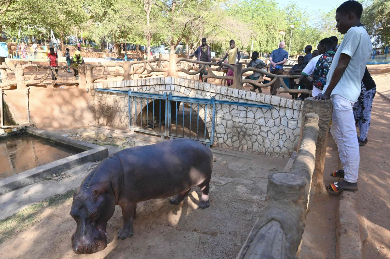 Visitors view a hippopotamus at the zoo section of the National Museum of Niger. Photo: AFP