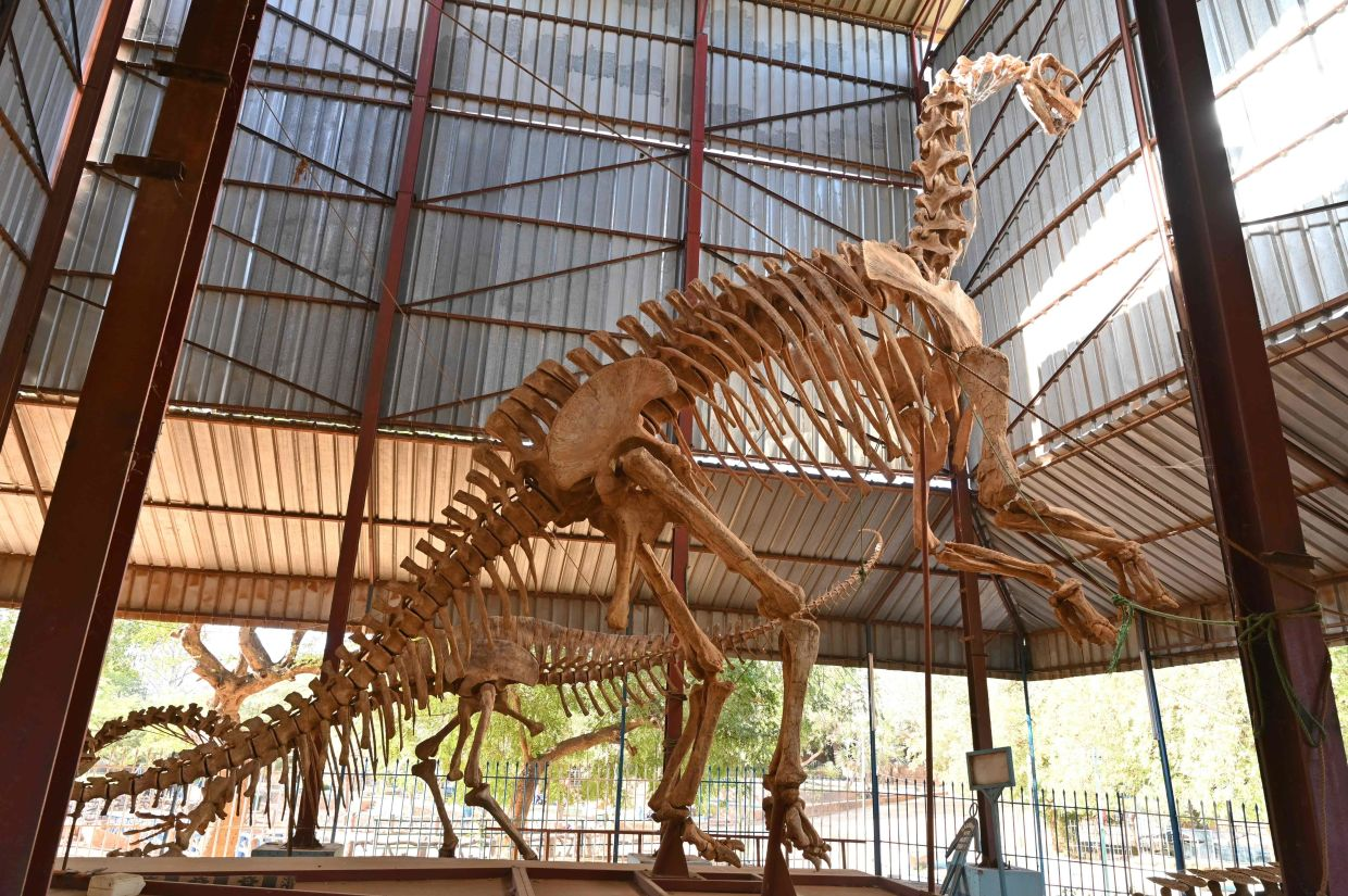 A dinosaur skeleton at the Age of the Dinosaurs section of the museum. Photo: AFP