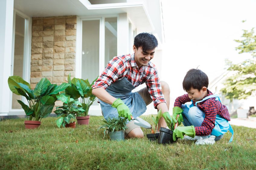 Starting a vegetable patch in the garden can be a fun activity for the whole family. It also teaches children to learn to grow something from a seed and to care for their plant. Photo: 123rf.com