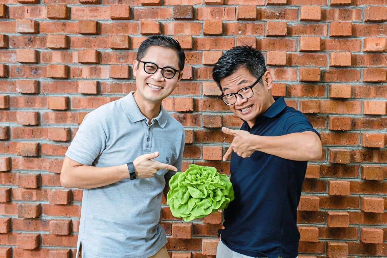 Marcus (left), who survived cancer five years ago, and Ng who suffered a stroke and suspected sclerosis, produce healthy vegetables for themselves and others too.