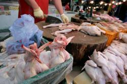 Reeling from coronavirus, Asia's poultry farmers battle bird flu outbreak