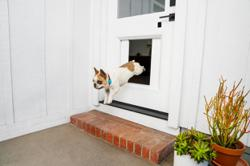 CES 2021: Smart pet door gives dogs home alone the freedom to go outside
