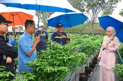 Growing chilli on campus to gain income, new skills