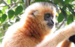 Gibbons to remain under Perhilitan custody pending court hearing