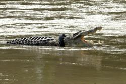 Call first, photo op later: SFC urges public to report croc sightings immediately