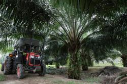 Malaysia initiates legal action against EU over anti-palm oil campaign