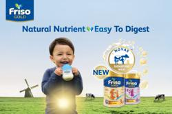 Friso Gold, Now Upgraded With NOVAS Signature MIlk