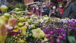 Coronavirus: U-turn on Lunar New Year flower markets causes confusion for Hong Kong florists