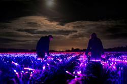 Farm dreamscapes: Dutch artist lights up leek fields with LED lights