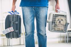 Brexit spells the end of seamless pet travel