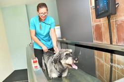 Physiotherapy can work wonders for your pets
