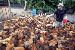 Philippines now free of H5N6 bird flu, but monitoring another strain