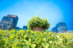 Japanese botanist Miyawaki's method of planting native forests becoming a hit