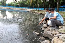 Water sample results on lake pollution out soon