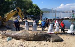 Whale shark carcass found floating off Pulau Pangkor
