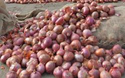 Onion prices back stable, supply sufficient until August, says Domestic Trade Minister